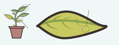 planta-6