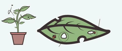 planta-9